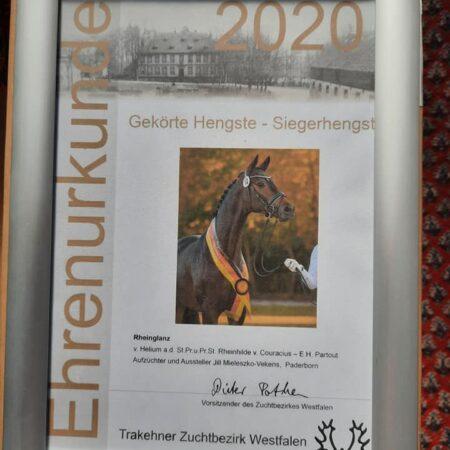 Siegerhengst